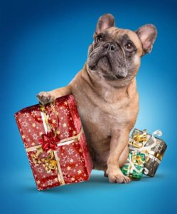 eco-friendly dog gifts