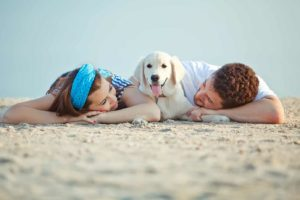 dogs make owners healthy