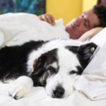 3 questions to ask about sleeping with dogs