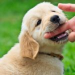 4 tips to stop puppy biting