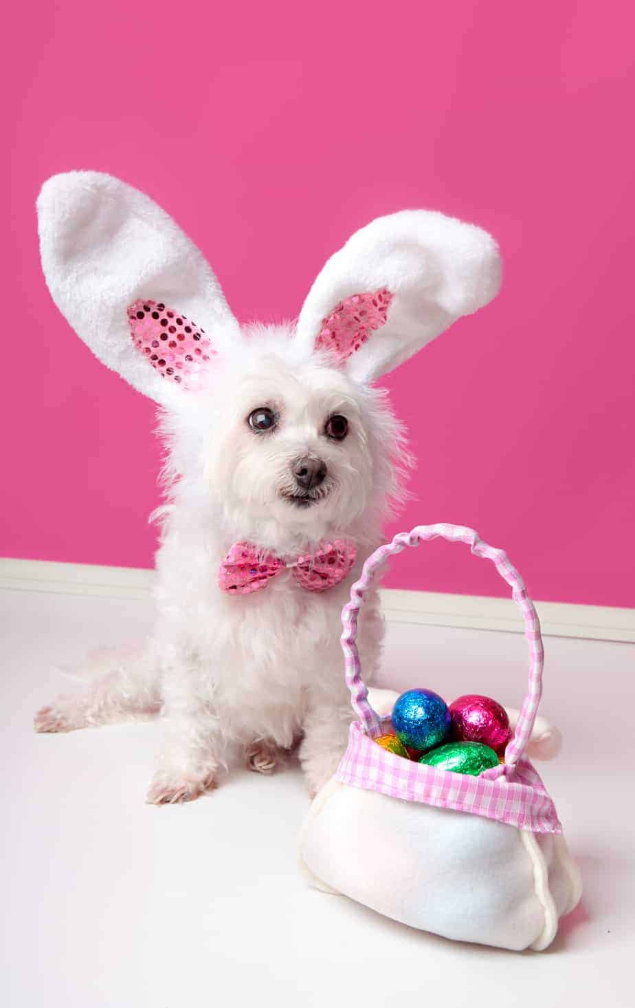 easter foods dangerous to dogs