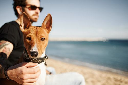 Pick the perfect dog-friendly road trip destination