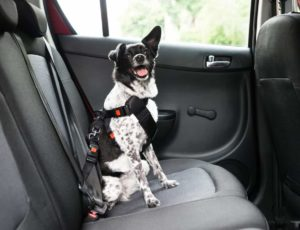 Use a dog safety harness to ensure a dog-friendly road trip