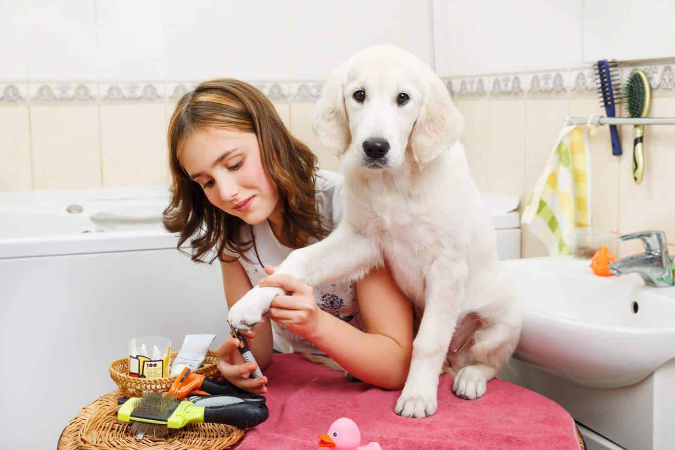 Pamper your dog with a trip to a luxury dog spa.