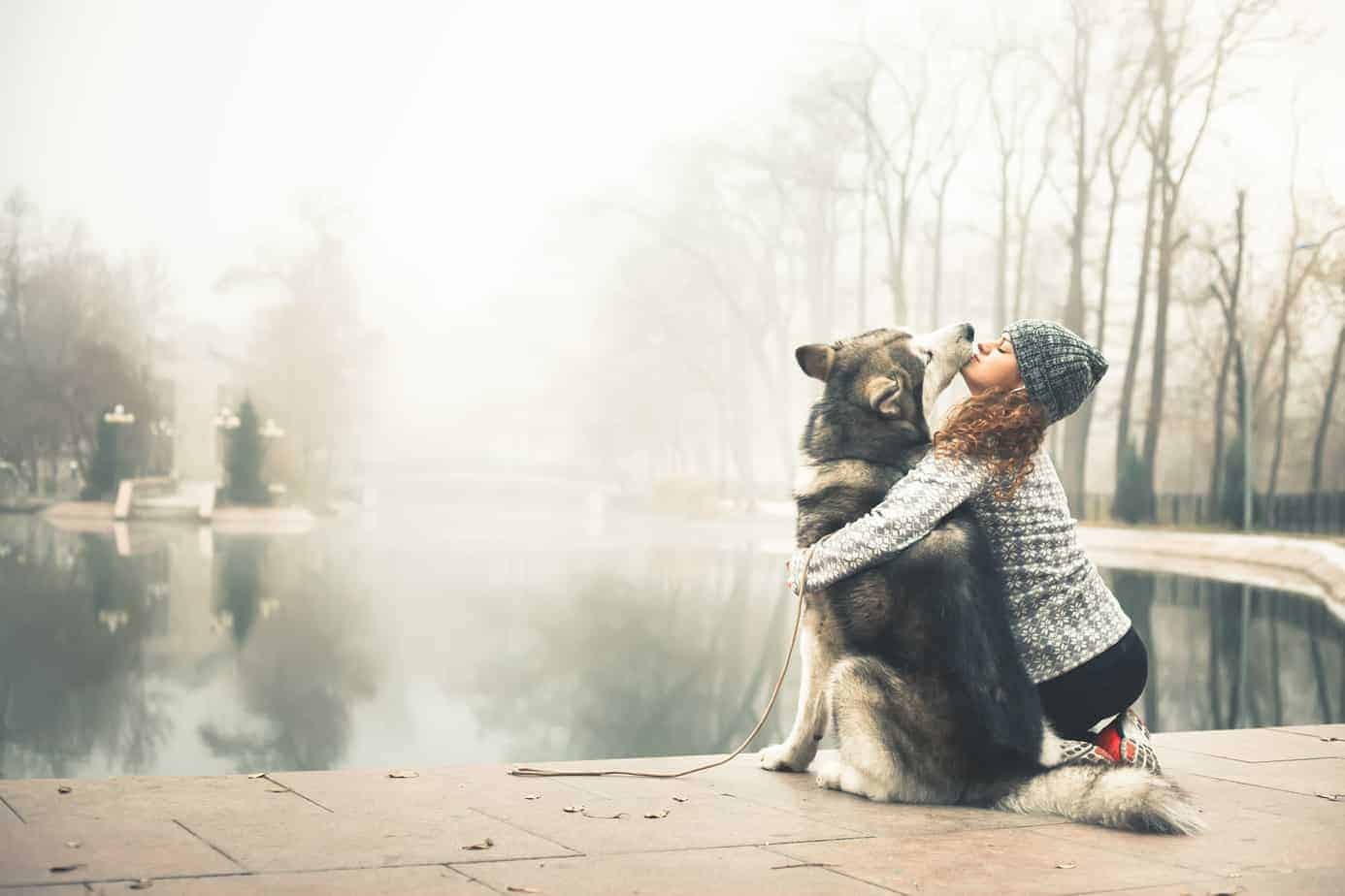 Large husky gives woman a kiss. Dogs help owners cope with depression
