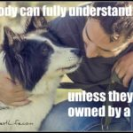 Dog inspiration: Owned by a dog