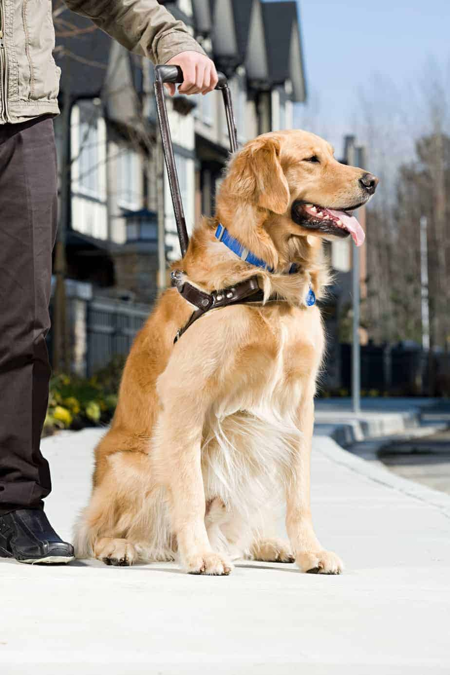 Unlike emotional support pets, service dogs are individually trained to perform tasks such as lead people who are blind.
