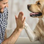 10 weekly health checks for dogs