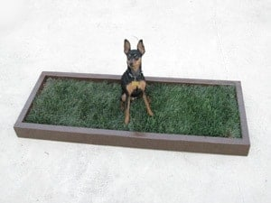 Use dog potty boxes to stop dog peeing on the bed.