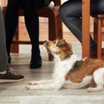 Add 5 canine superfoods to your dog's diet