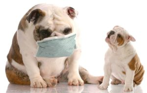 Don't let a pet dander allergy keep you from your dog.