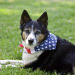 Protect your dog on the Fourth of July
