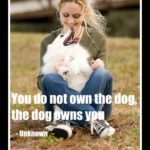 the dog owns you