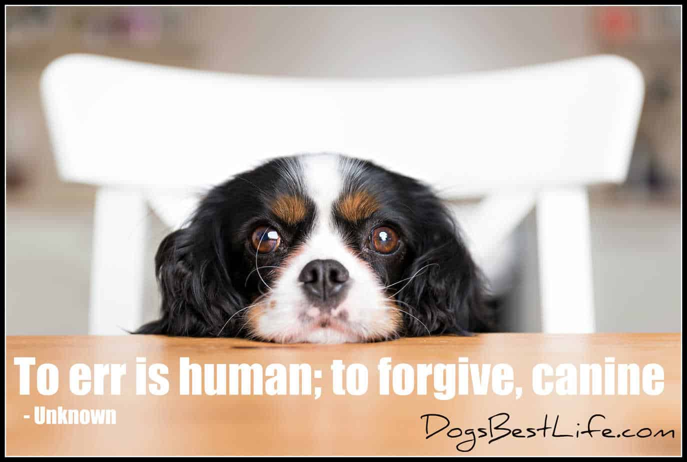 to forgive, canine