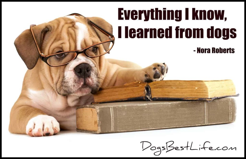 learned from dogs