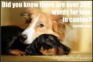 300 words for love in canine