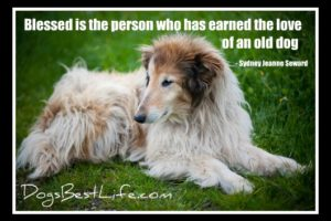 blessed is the person who has earned the love of an old dog