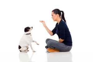 reward your dog for good canine behavior