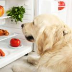 Can dogs eat grapes? 20 foods you need to know about