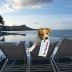 dog-friendly travel cities