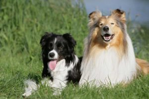 male or female dogs