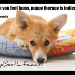 Dog inspiration: Puppy therapy