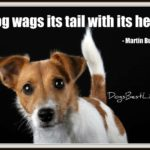 Dog inspiration: Dogs wag with heart