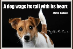 wags with heart