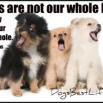 Dog inspiration: Dogs make our lives whole