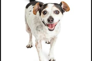 dogs laugh with tails