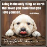 Dog inspiration: Loves you more than you love yourself