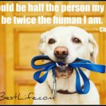 Dog inspiration: If I could be half the person my dog is ...