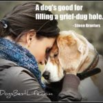 Dog inspiration: A dog's good for filling a grief-dug hole