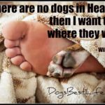 Dog inspiration: If there are no dogs in heaven ...
