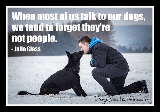 talk to dogs forget they're not people