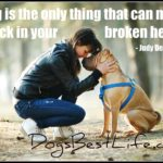Dog inspiration: A dog can mend a crack in your broken heart