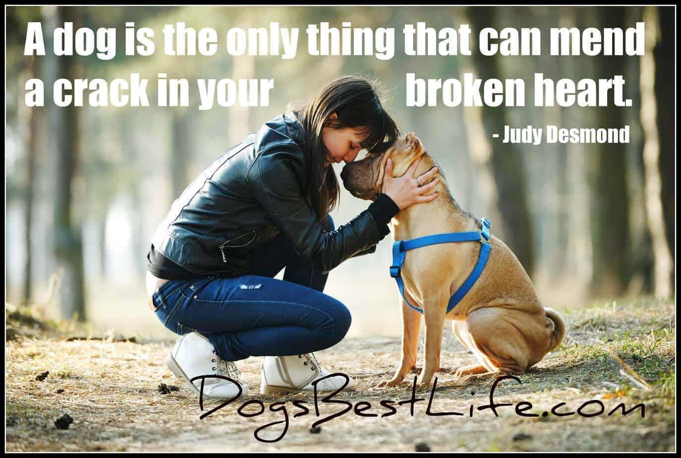 dogs mend crack in broken heart