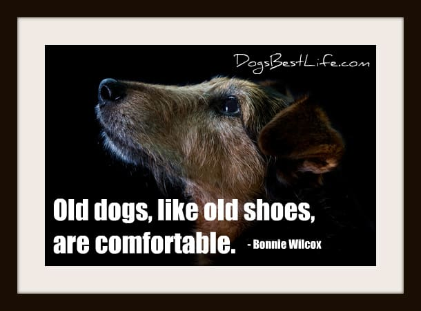 old dogs are comfortable