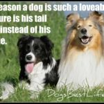 Dog inspiration: Dog wags tail instead of tongue