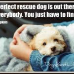 perfect rescue dog