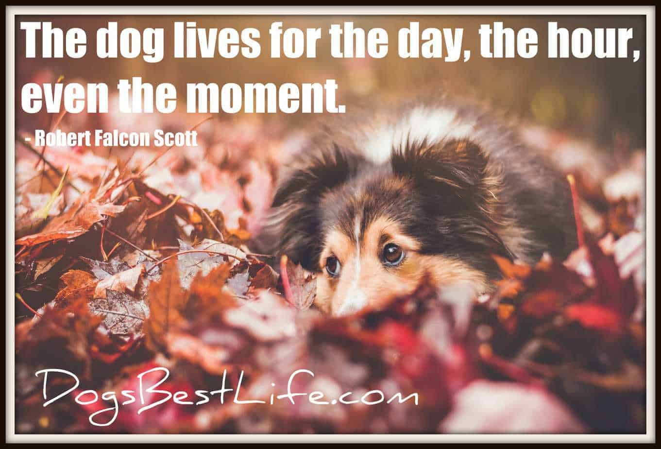 dog lives moment