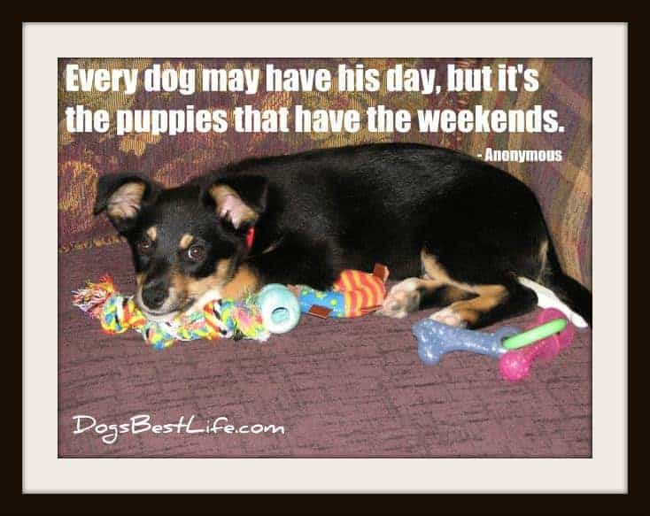 puppies have the weekends
