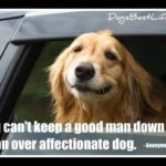 You can't keep a good man down -- or an over affectionate dog.