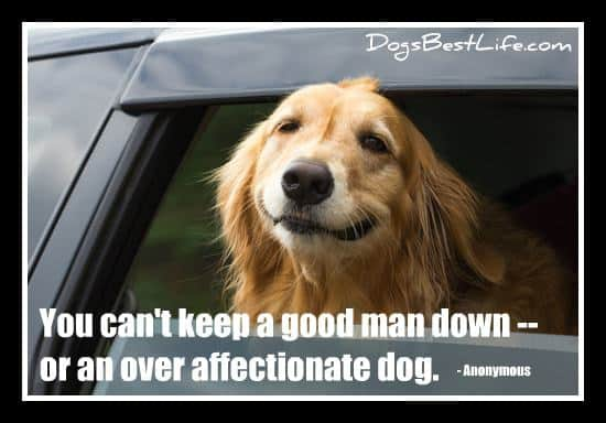 can't keep good man down or an over affectionate dog