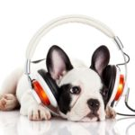 Use music to soothe dog separation anxiety