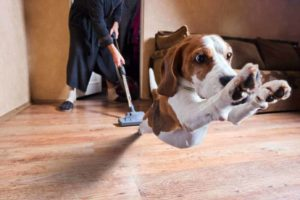 Using a vacuum is a great way to clean up dog hair.