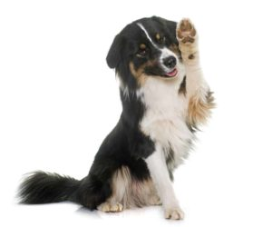dependent dog