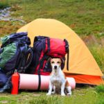 Take your dog camping