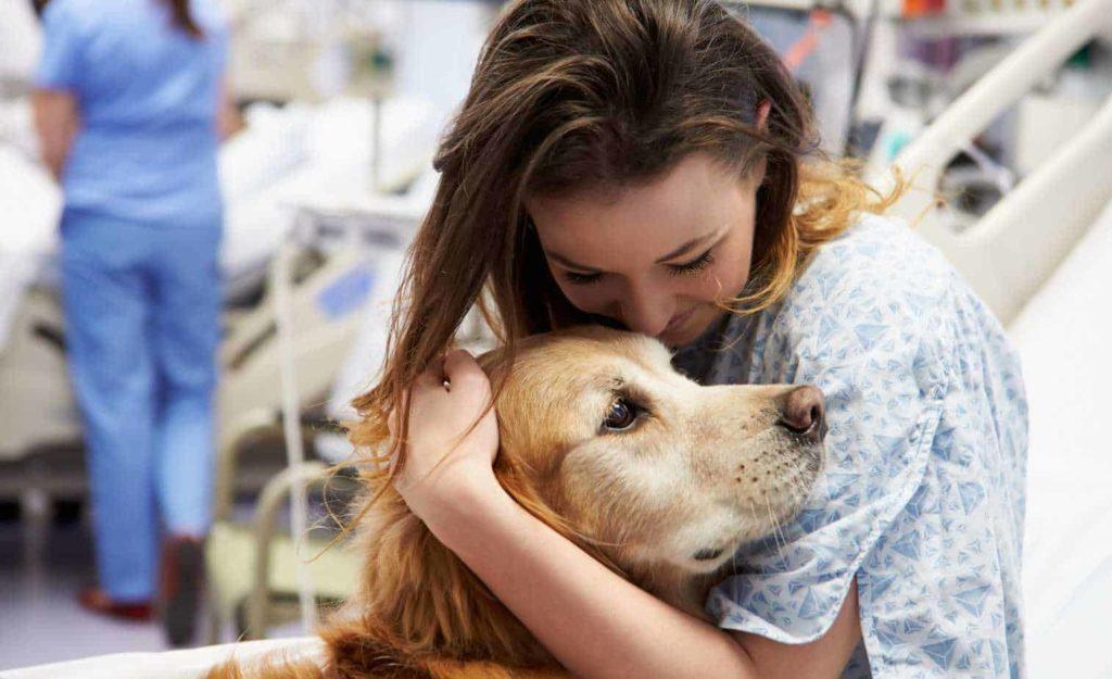 dogs visit hospital