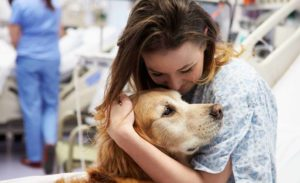dogs visit hospitals